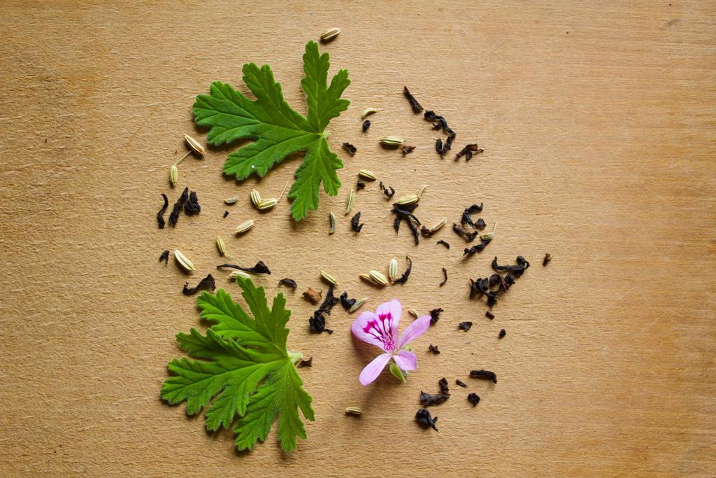 tisane-geranium-rosat