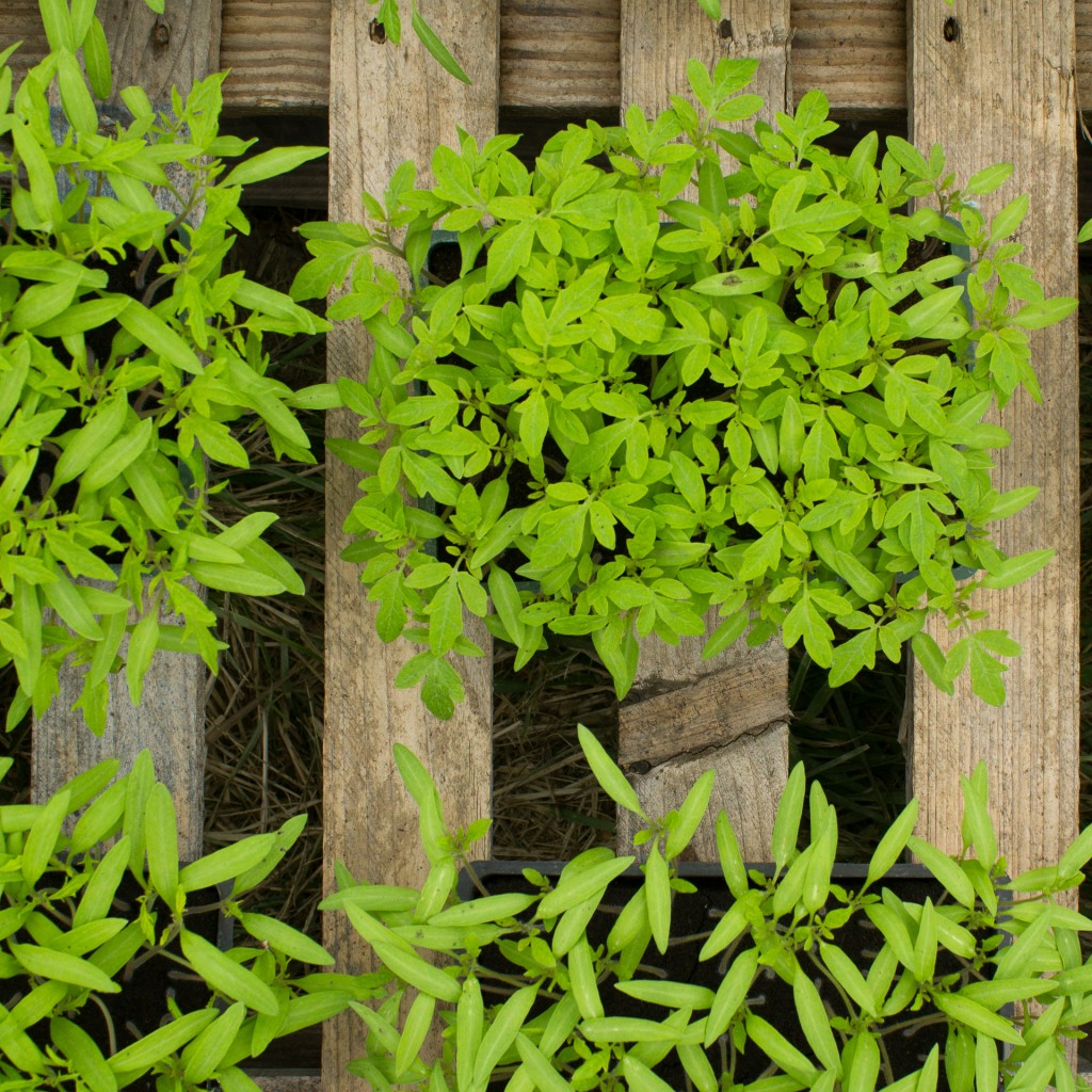 plants-bio-9202