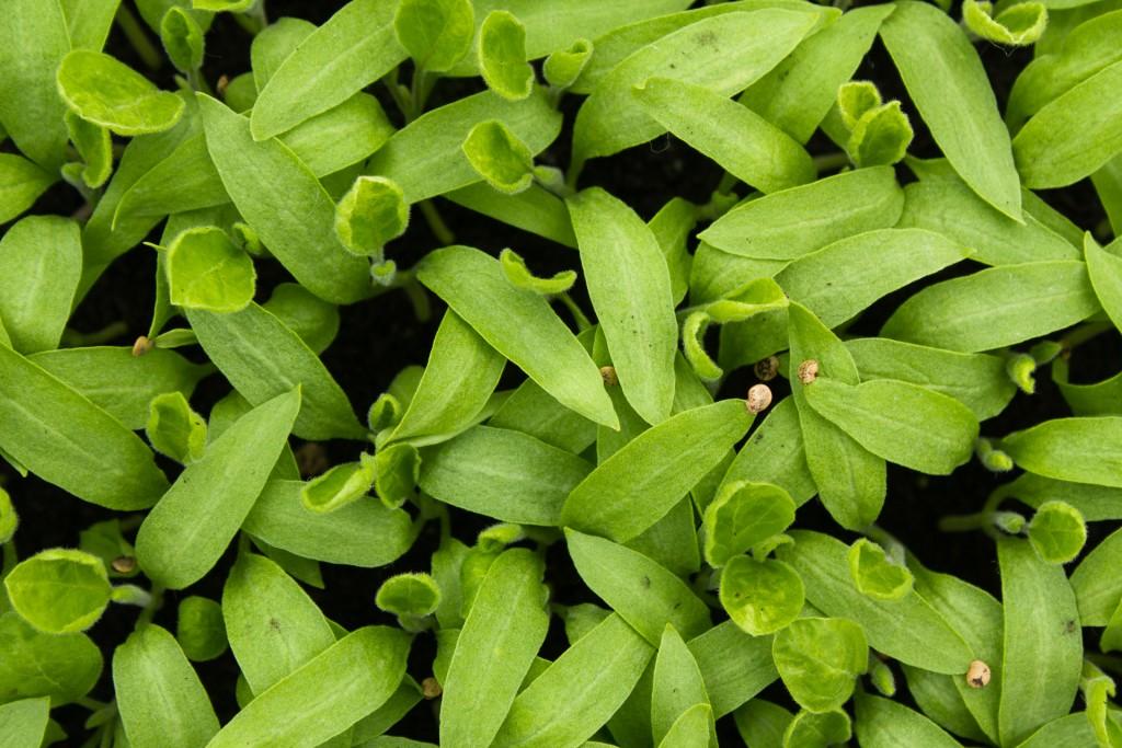 plants-bio-9211