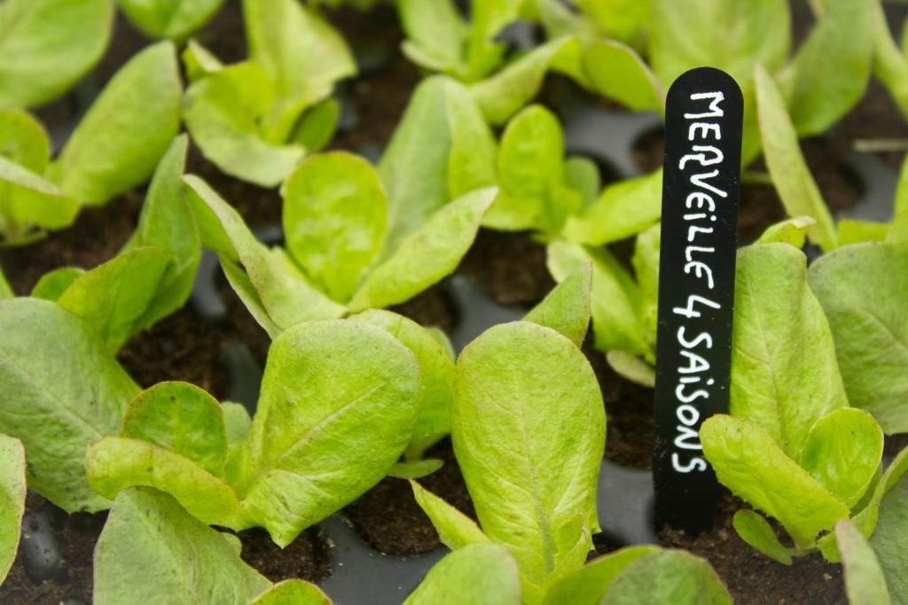 plants-bio-9217