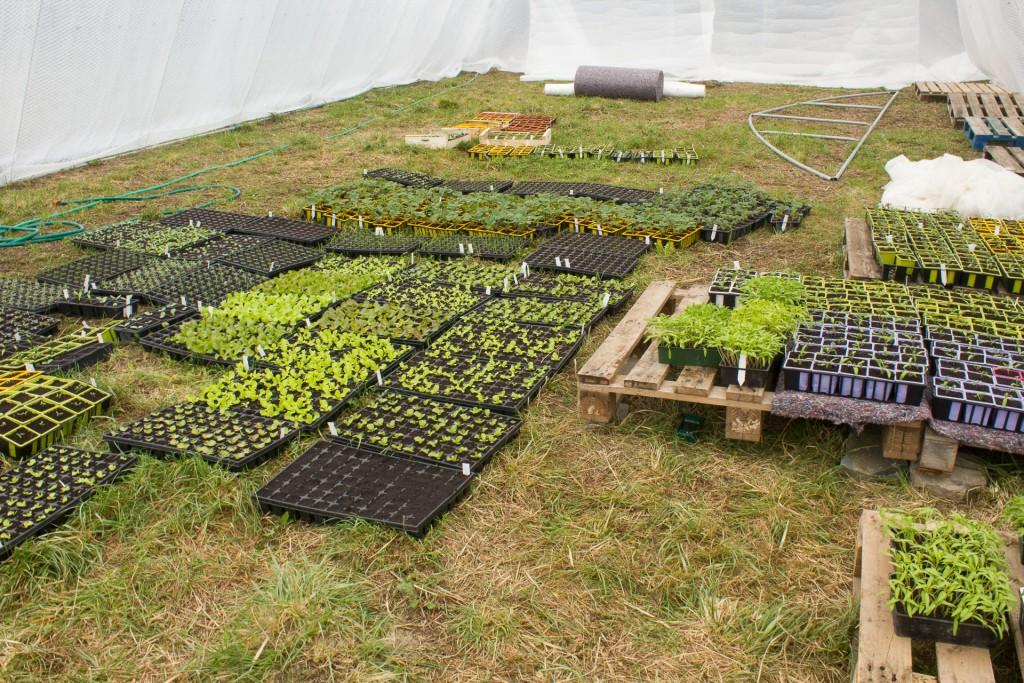 plants bio