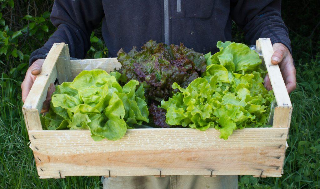 cageot de salades bio