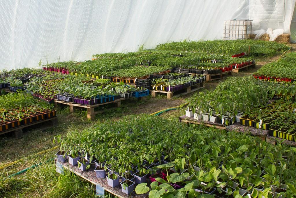 serre-plants-bio