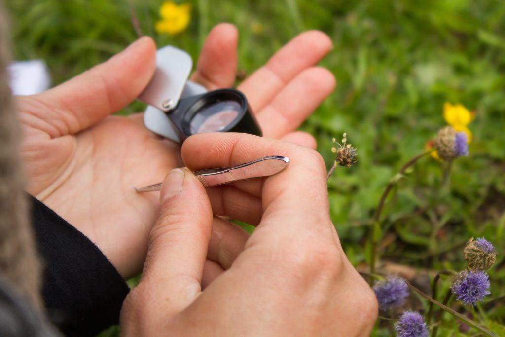 loupe et pince à épiler pour week end botanique