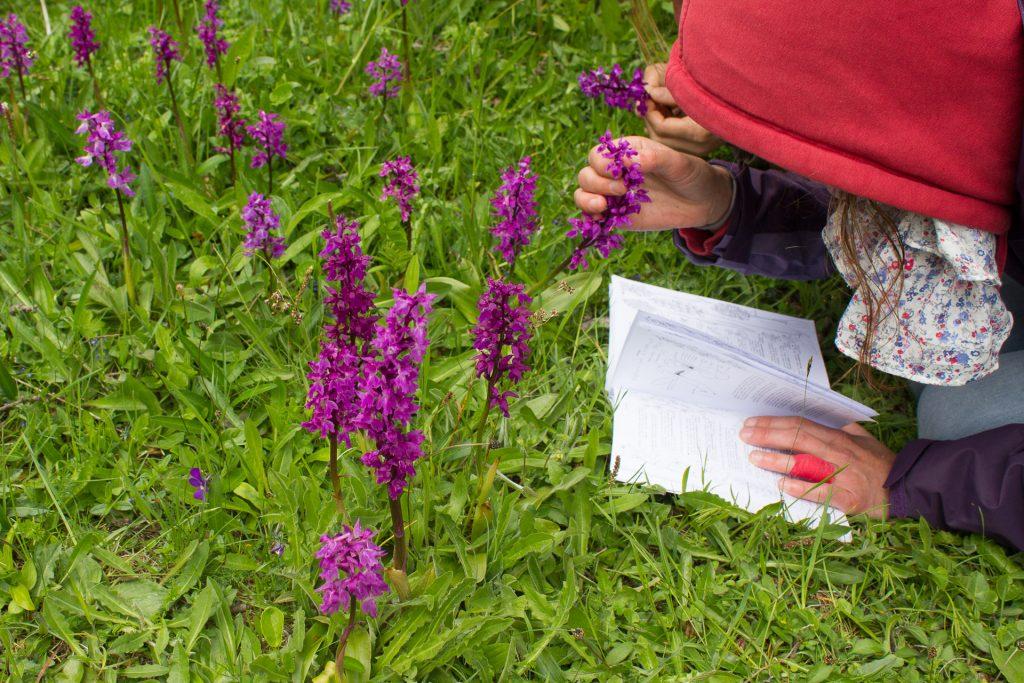 week end botanique identification orchidées