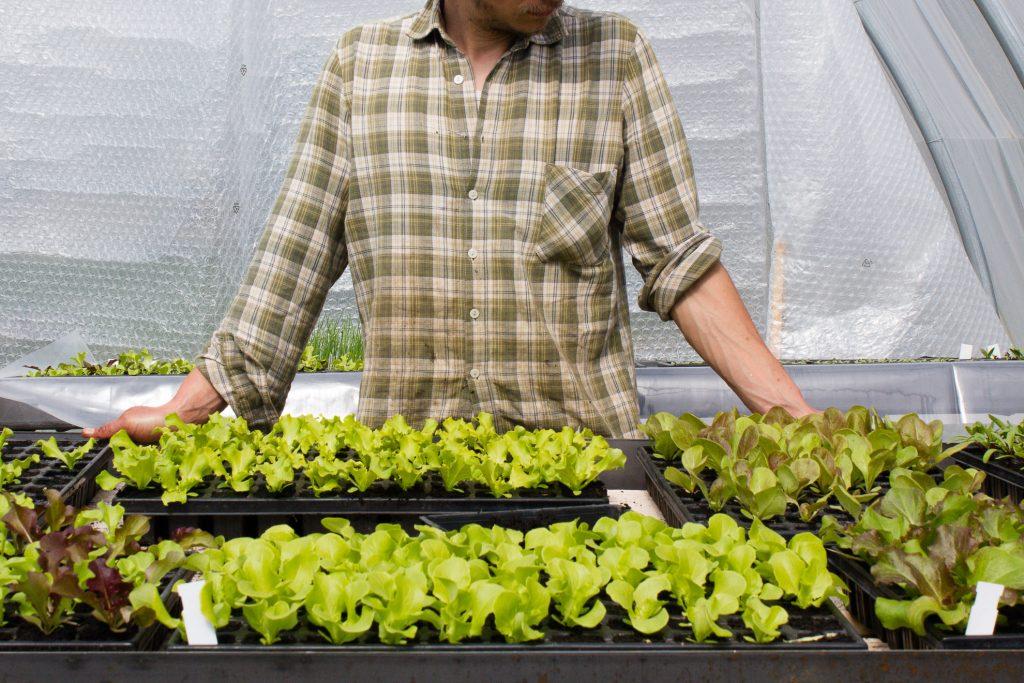 plants-salades