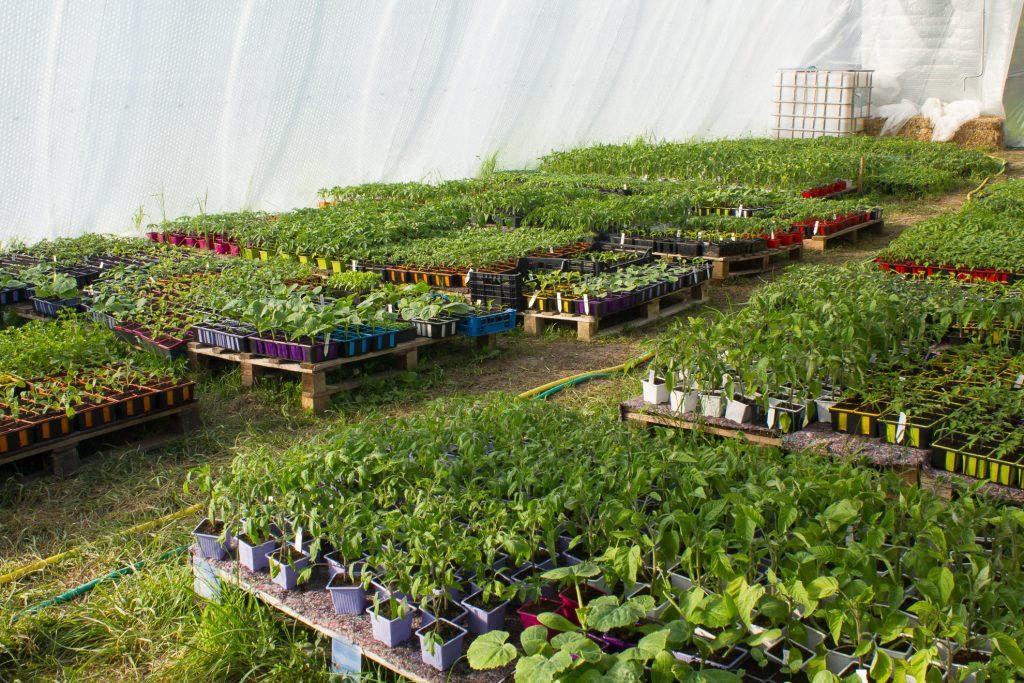 plants-serre non chauffée