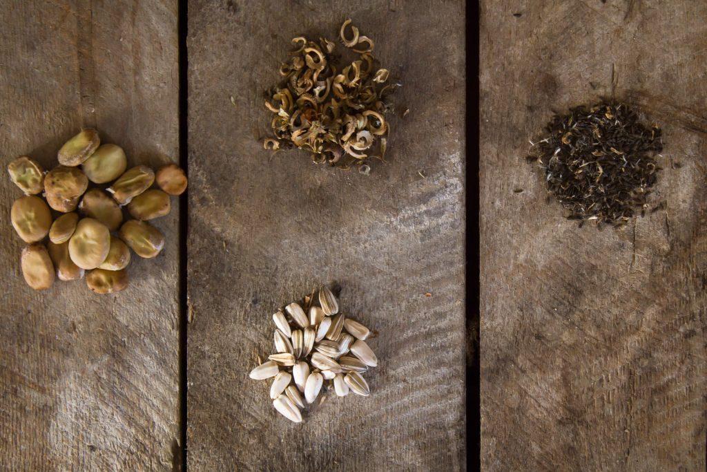 semences bio où les acheter