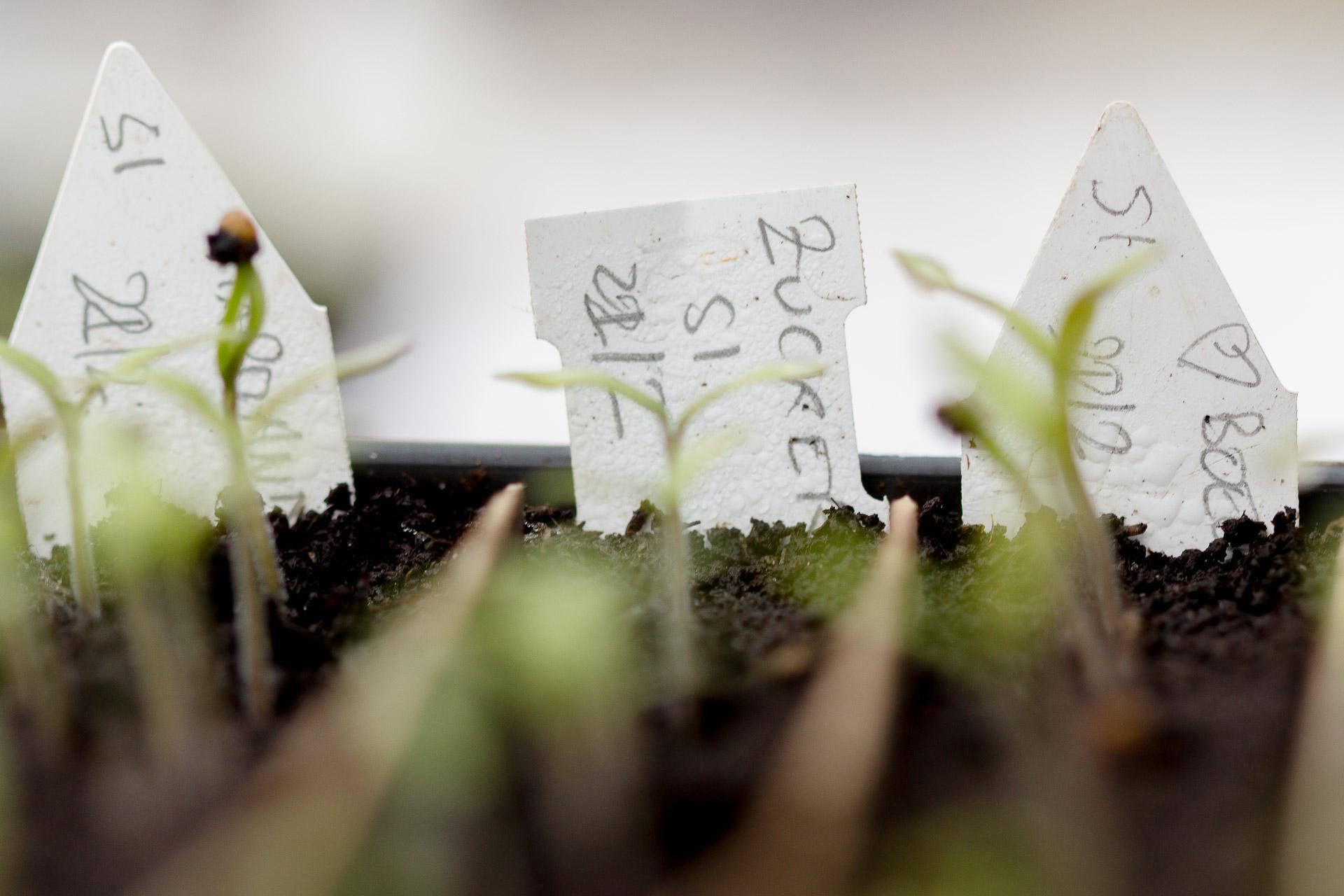 plants de tomates bio