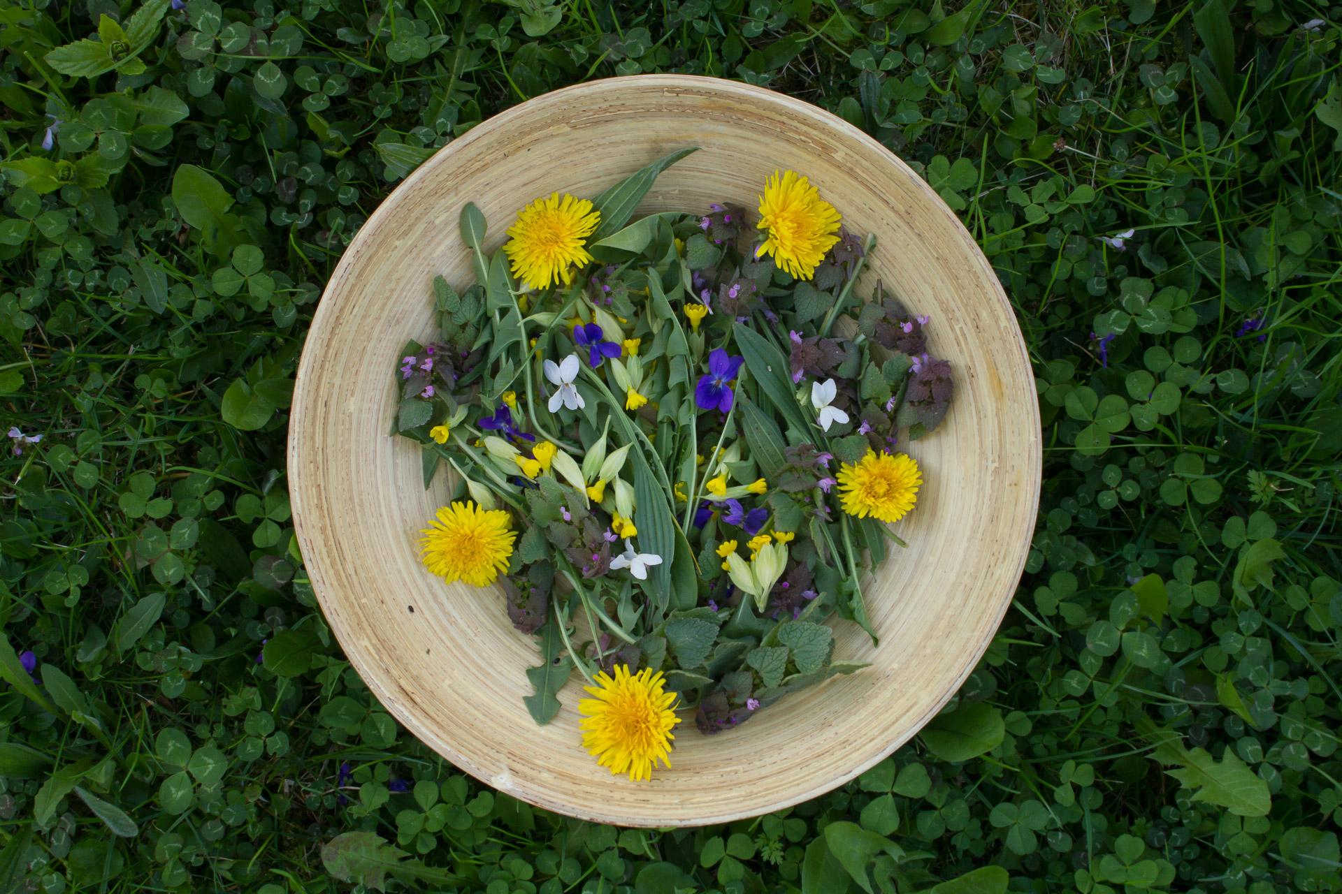 salade sauvage printemps