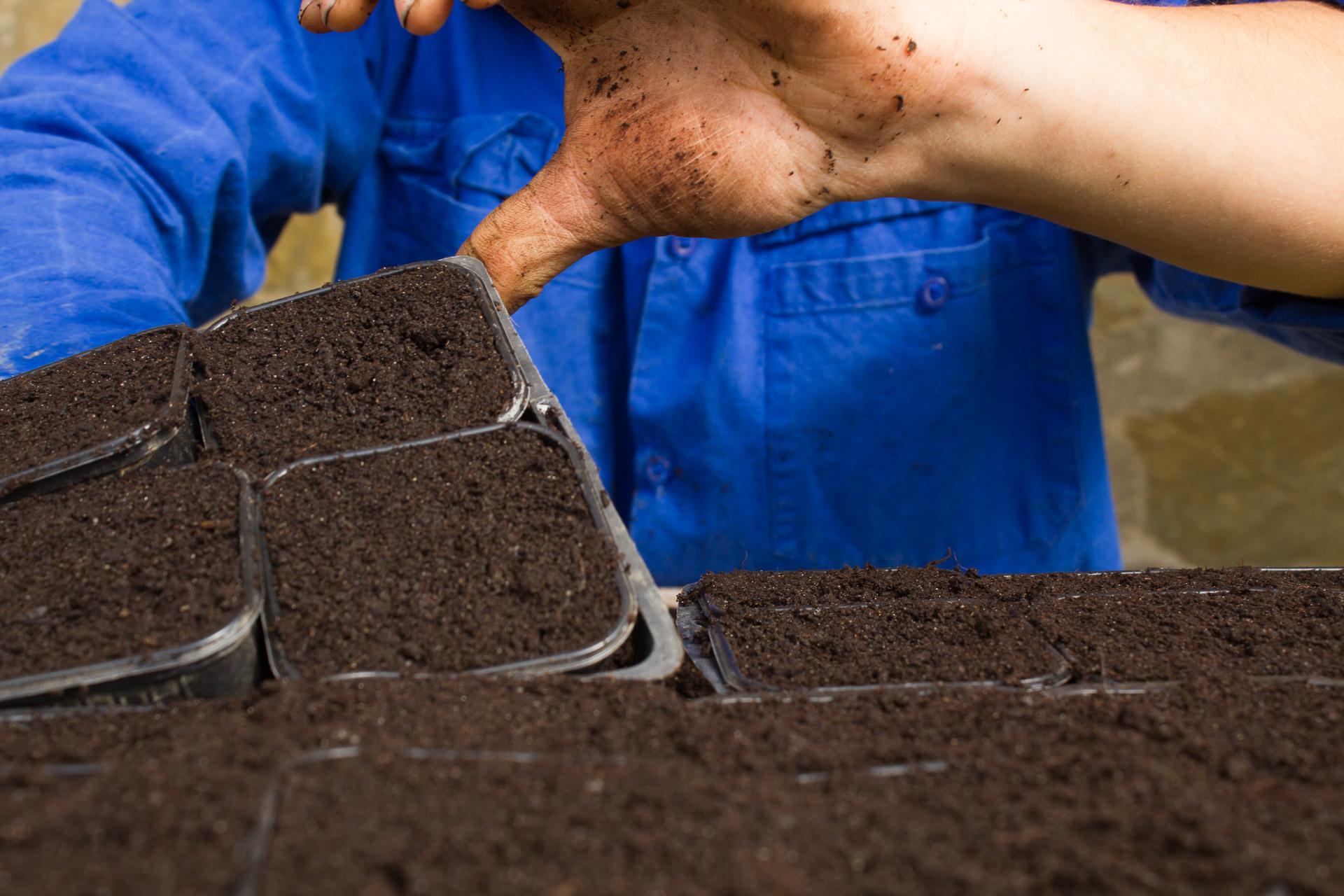 semis plants capucine bio