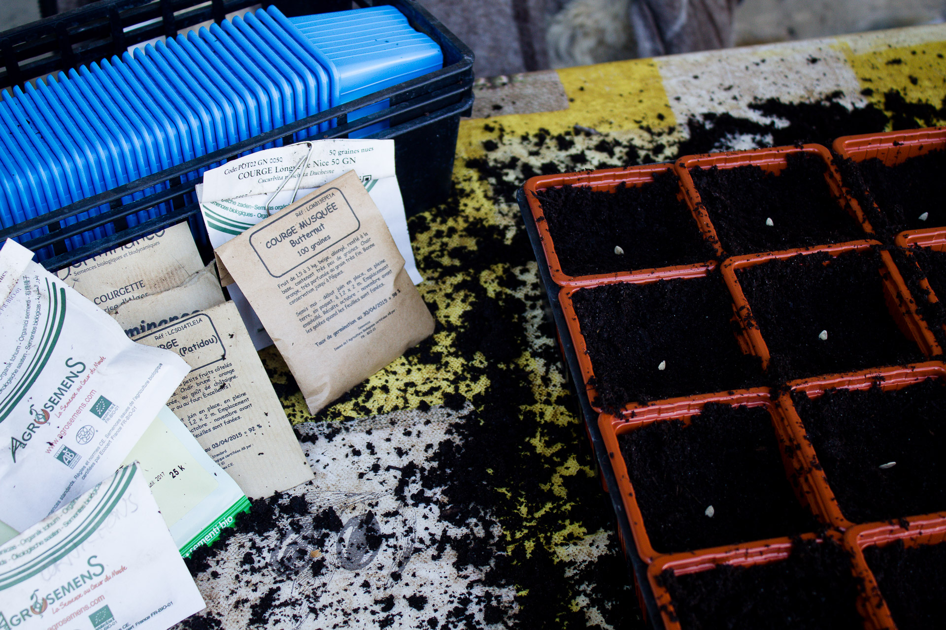 semis en godet cucurbitacées
