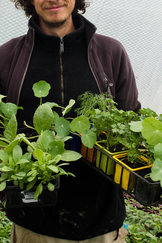 plants de fleurs bio