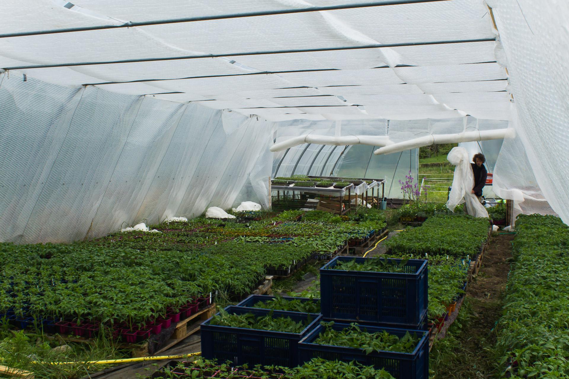 serre froide en montagne pour la production de plants bio