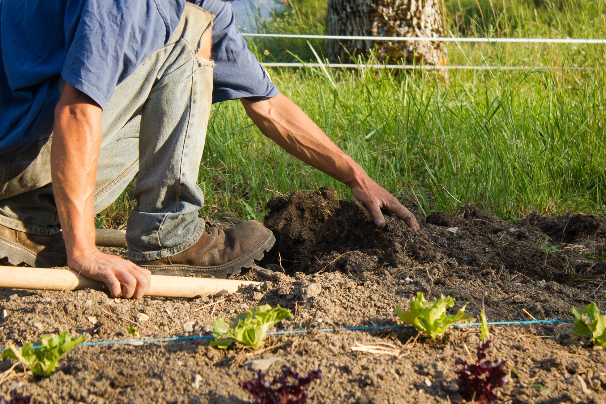 grelinette travail du sol en maraichage sol vivant