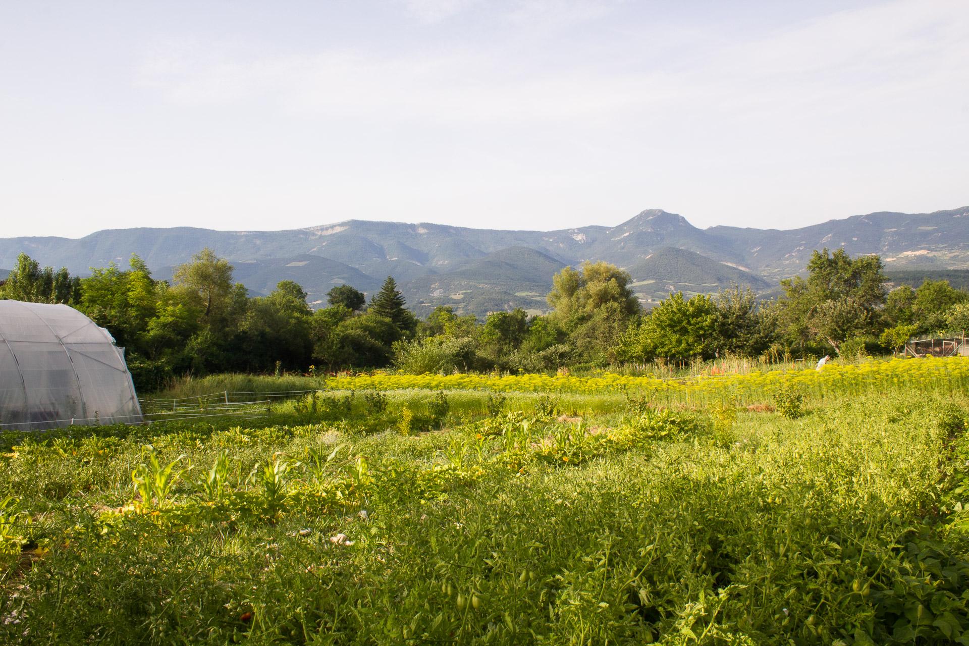 ferme agroécologie bio rosans
